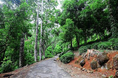 Photograph - Forest Path Through Greenery. Sri Lanka by Jenny Rainbow