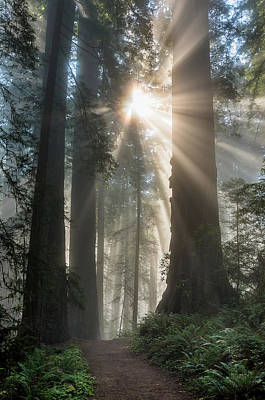 Photograph - Forest Path To The Light by Greg Nyquist