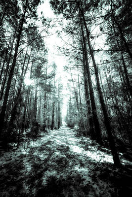 Photograph - Forest Path by Van Sutherland