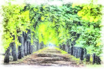 Photograph - Forest Path Watercolour Art by David Pyatt