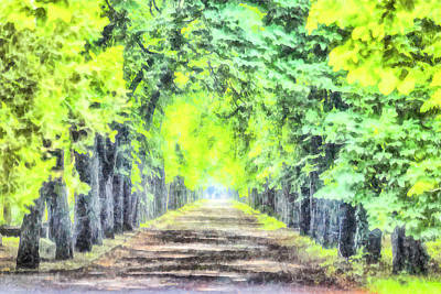 Photograph - Forest Path Watercolour by David Pyatt