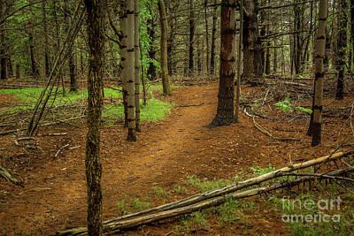 Photograph - Forest Pathways 1 by Roger Monahan