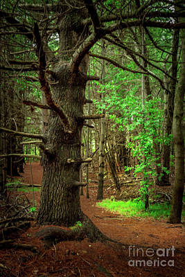 Photograph - Forest Pathways 2 by Roger Monahan