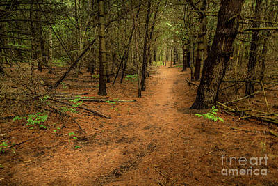 Photograph - Forest Pathways 3 by Roger Monahan
