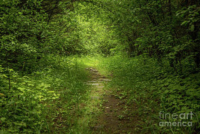 Photograph - Forest Pathways 4 by Roger Monahan