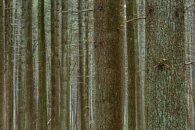 Photograph - Forest Pattern by Denise Bush