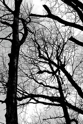 Photograph - Forest Patterns 10 Bw by Mary Bedy