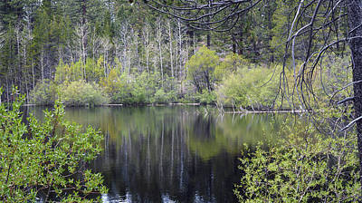 Photograph - Forest Pond by Brent Dolliver