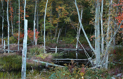 Photograph - Forest Pond by Joseph G Holland
