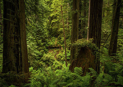 Photograph - Forest Primeval by TL Mair
