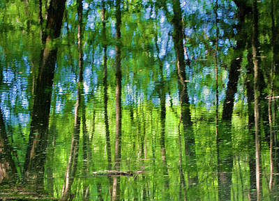 Photograph - Forest Reflected In Water by David Freuthal