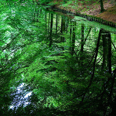 Forest Reflection Art Print by Dave Bowman