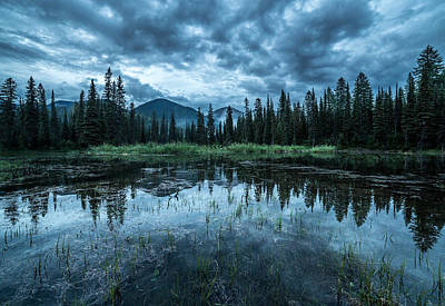 Forest Reflection // Whitefish, Montana  Art Print