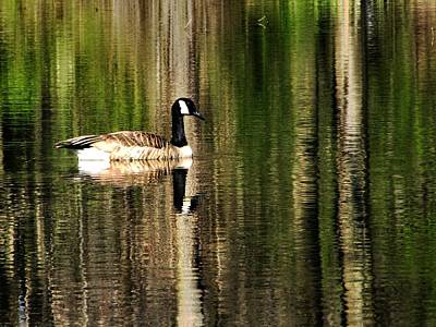 Photograph - Forest Reflection by Scott Hovind