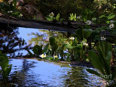 Photograph - Forest Reflections by George Tuffy