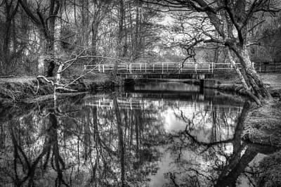 Photograph - Forest Reflections by Hazy Apple
