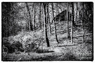 Photograph - Forest Retreat by William Norton