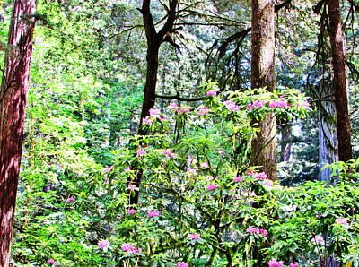 Photograph - Forest Rhoderdrem by Marilyn Diaz