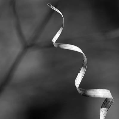 Photograph - Forest Ribbon 3 Bw by Mary Bedy