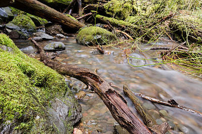Photograph - Forest River Details by Margaret Pitcher