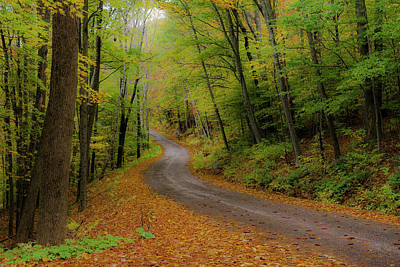 Photograph - Forest Road by Gary Lengyel