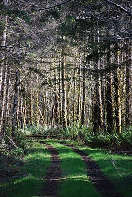 Photograph - Forest Road by Gene Ritchhart