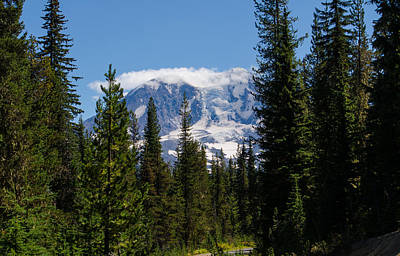 Photograph - Forest Road Mount Adams by Tikvah's Hope