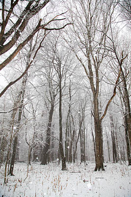 Photograph - Forest Snow by Dale R Carlson
