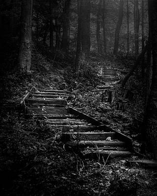 Rainy Day - Forest Stairs by Scott Norris