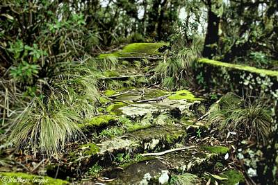 Photograph - Forest Stairway by Wallaroo Images