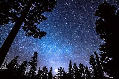Photograph - Forest Star Gazing An Astronomy Delight by James BO Insogna