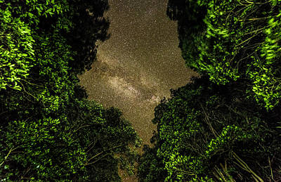 Photograph - Forest Star Patch by T Brian Jones