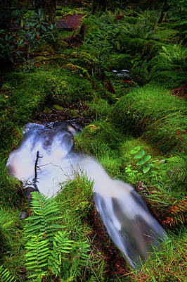 Photograph - Forest Stream. Benmore Botanic Garden by Jenny Rainbow