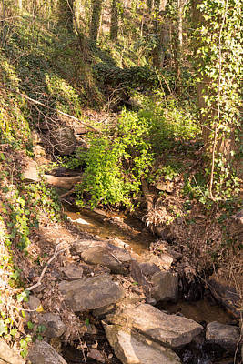 Photograph - Forest Stream In The Mountains In Springtime by MM Anderson