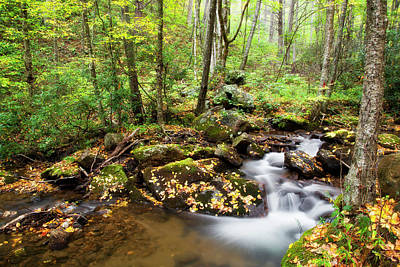 Photograph - Forest Stream by Jill Lang
