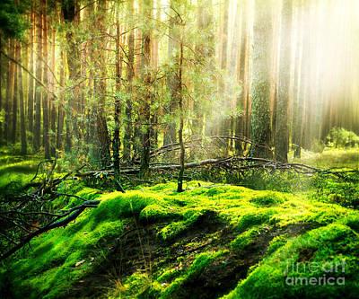 Rain Forest Digital Art - Forest by Caio Caldas