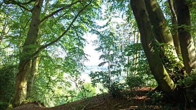 Photograph - Forest Summer by Anne Kotan