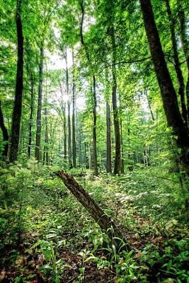 Photograph - Forest Sun by Alan Raasch