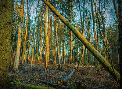 Photograph - Forest Sun #h0 by Leif Sohlman