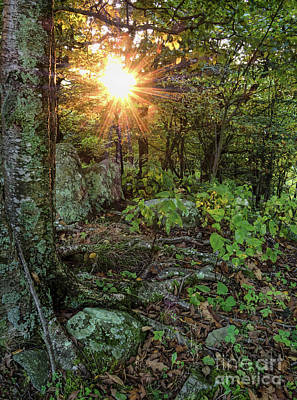 Photograph - Forest Sunburst, Shenandoah National Park, Virginia  -64125-6412 by John Bald