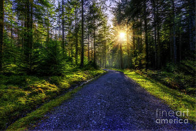 Art Print featuring the photograph Forest Sunlight by Ian Mitchell
