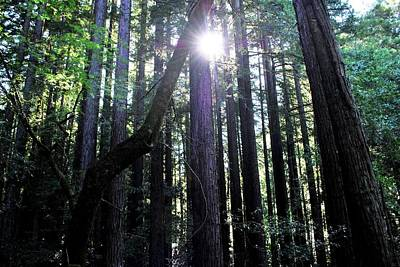 Photograph - Forest Sunlight Through Tree Line by Matt Harang