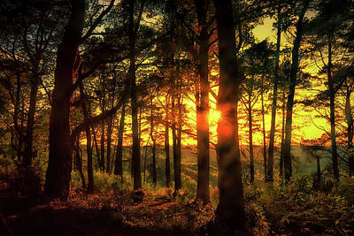 Photograph - Forest Sunset by Chris Boulton