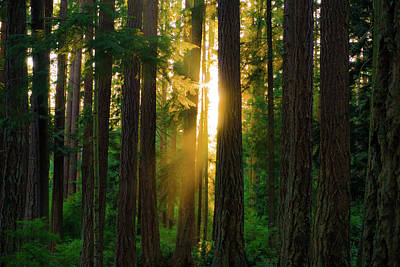 Photograph - Forest Sunset by Dave Matchett