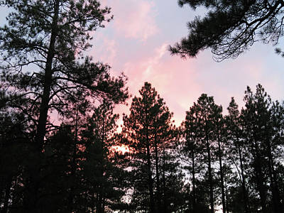 Photograph - Forest Sunset by Laurel Powell