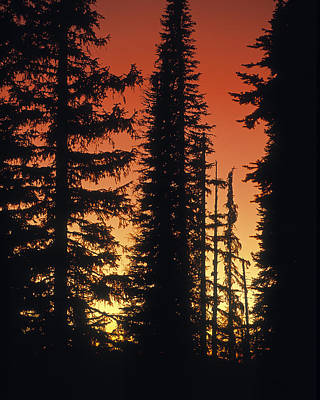 Photograph - Forest Sunset by Leland D Howard