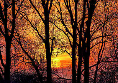 Photograph - Forest Sunset by Nadia Sanowar