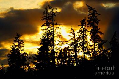 Art Print featuring the photograph Forest Sunset  by Nick Gustafson