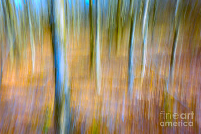 Photograph - Forest Thru The Trees by Patti Schulze