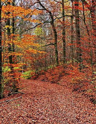 Taunus Photograph - Forest Trail by Daniel Koglin